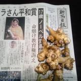 菊イモの「キクちゃん」収穫始まりました。の画像